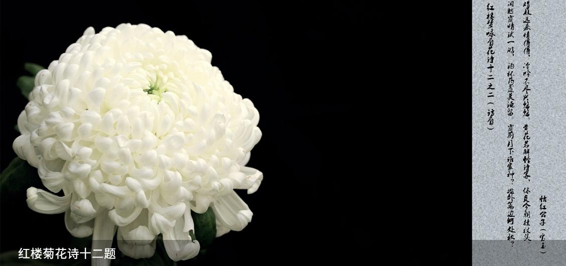 红楼菊花诗十二题