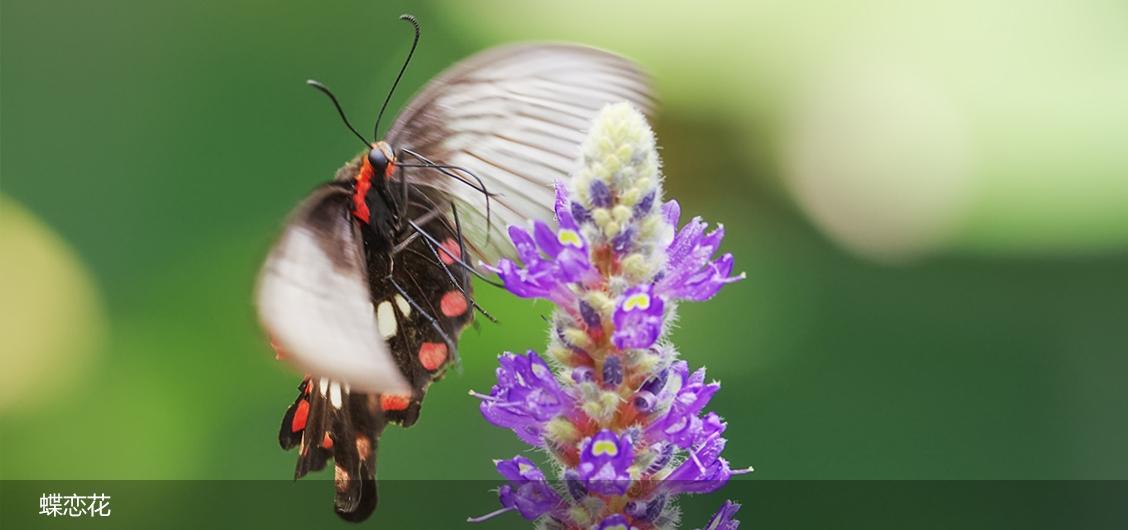 蝶恋花。。。