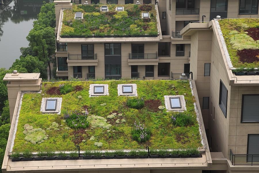 黑森林的5栋v高层高层,11栋小植被和屋顶的别墅都被种上了绿色别墅.2018租黄金海岸好出吗a高层高层图片