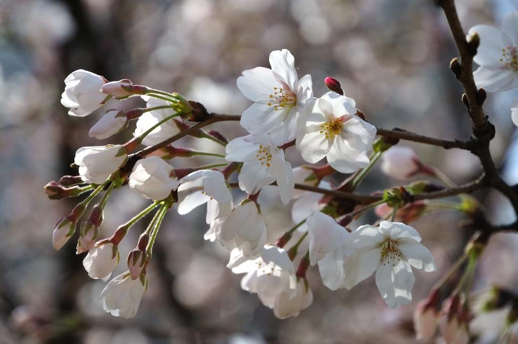春天的图片和景色-风景图片_最美春景图片大全_春天带