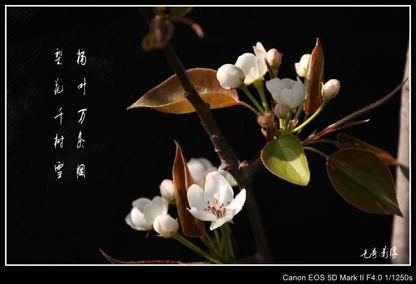赞美春天的花与诗
