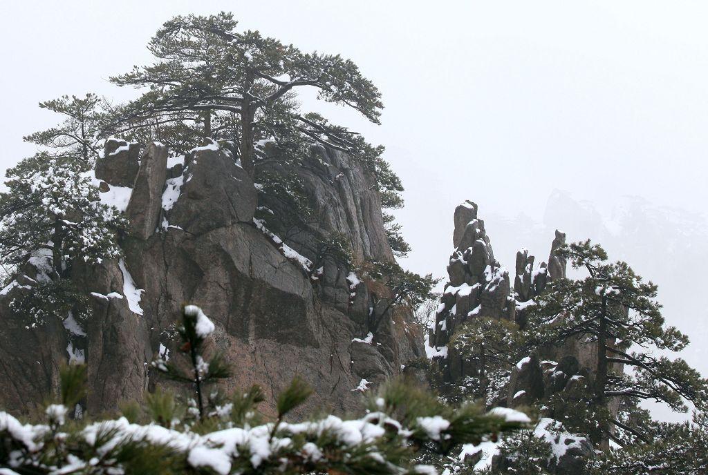 大美黄山雪中松树