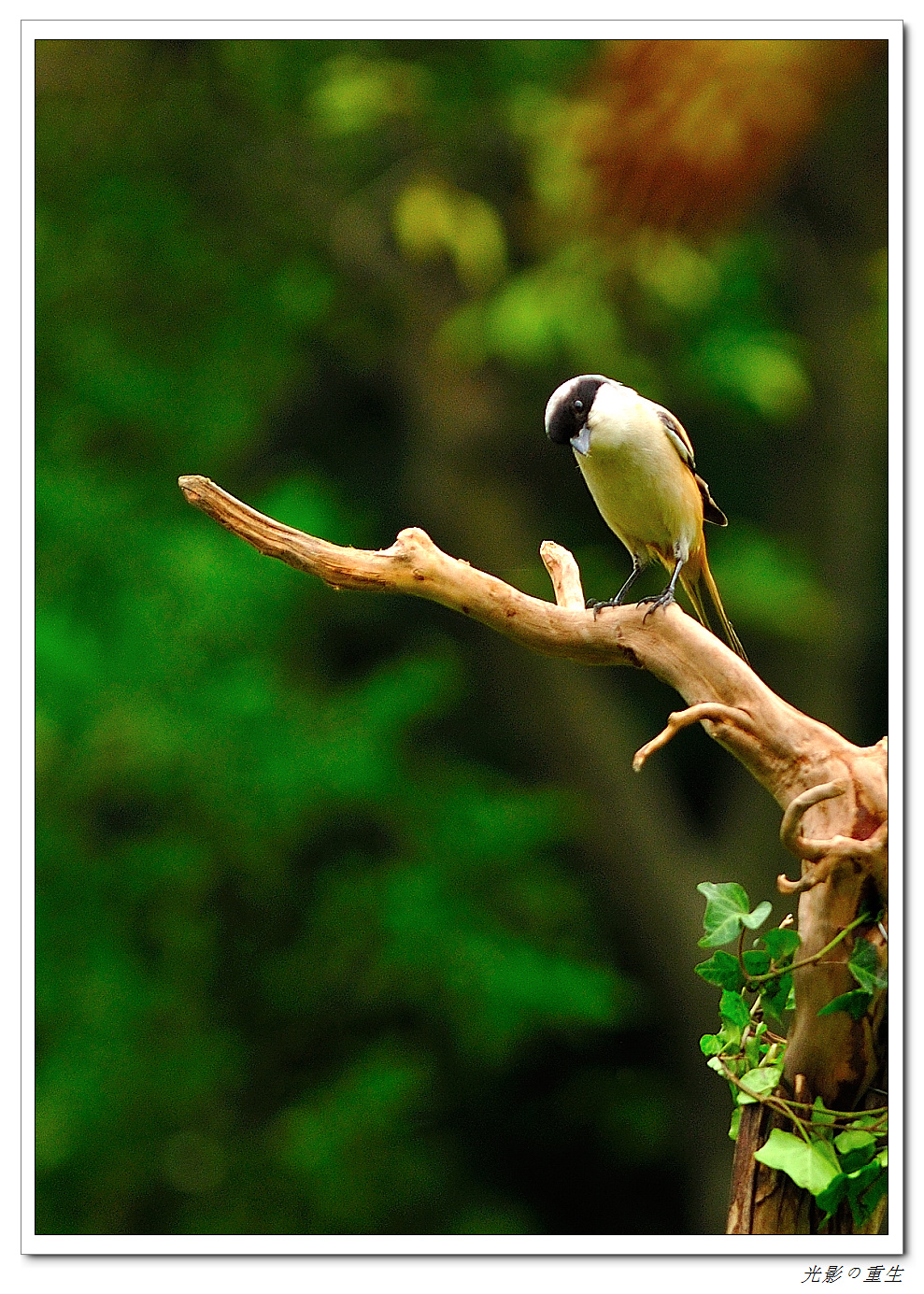 壁纸 动物 鸟 鸟类 雀 989_1385 竖版 竖屏 手机
