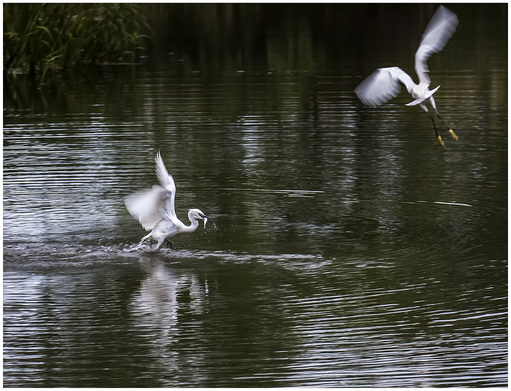 新江湾城绿地拍鸟