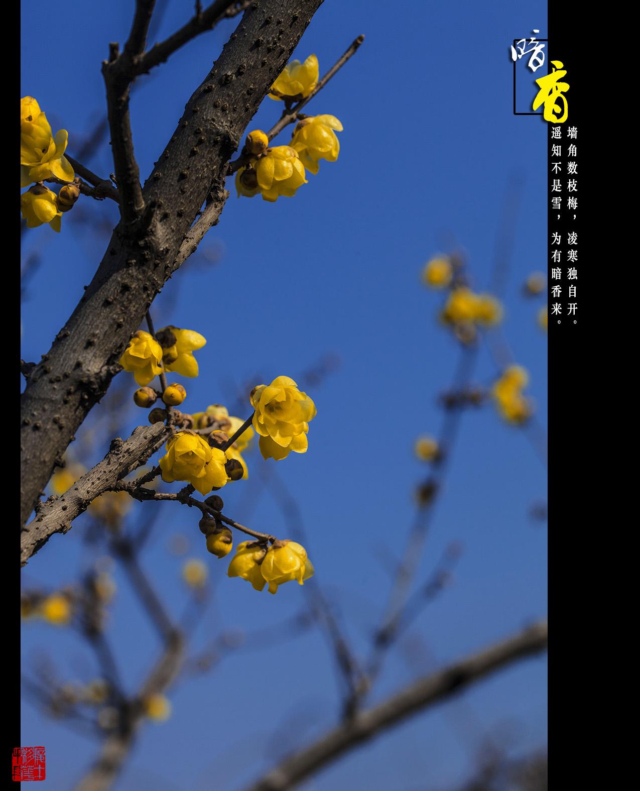 _MG_6361.jpg