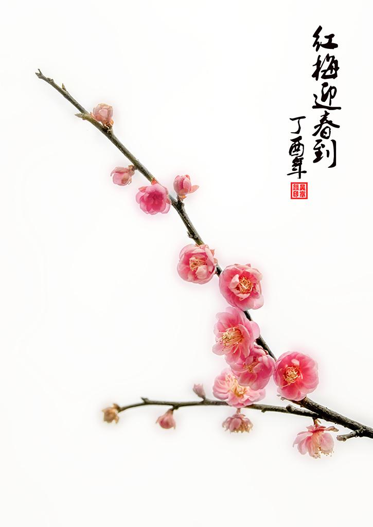 红梅迎春到